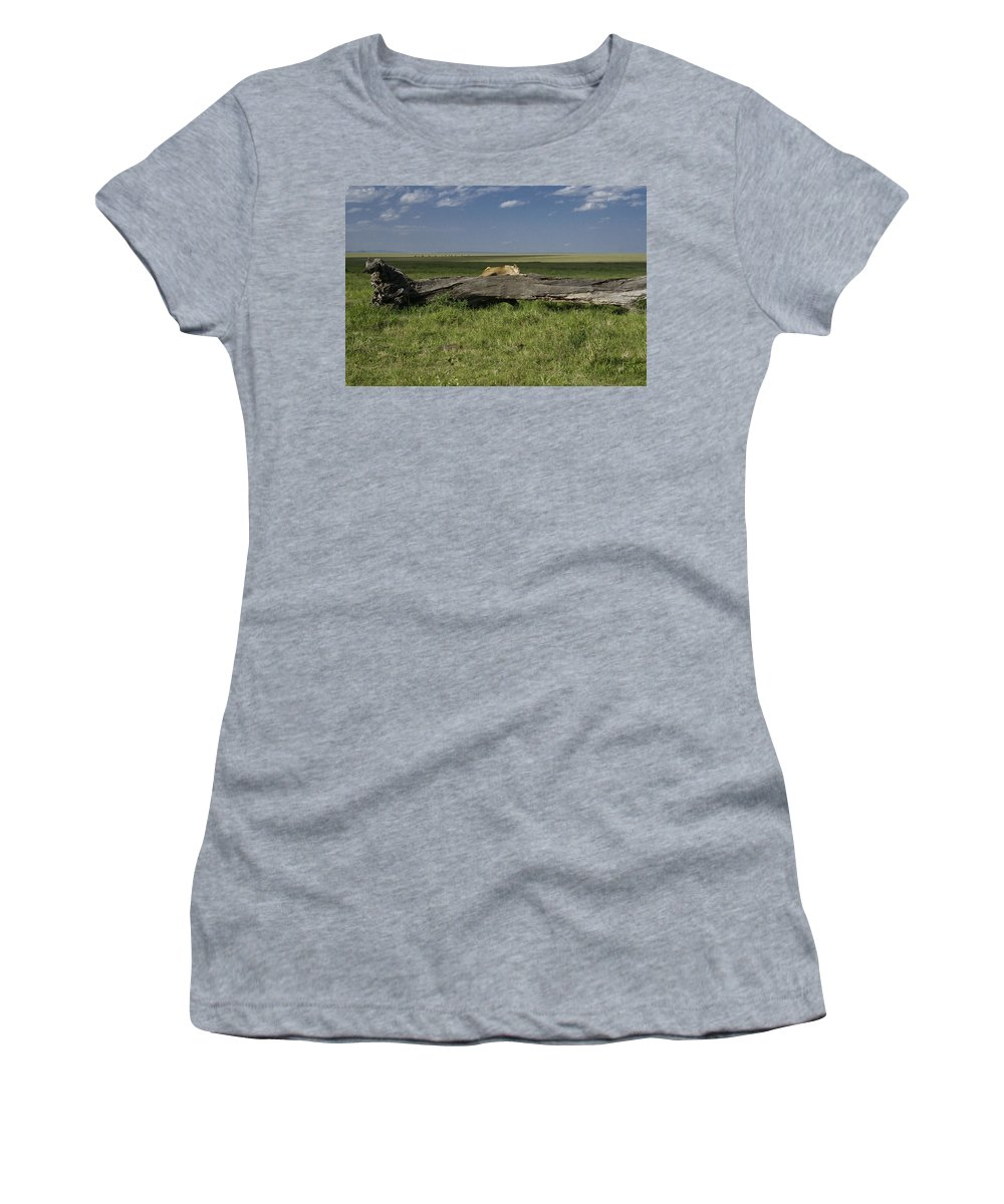 Africa Women's T-Shirt featuring the photograph Lion on a Log by Michele Burgess
