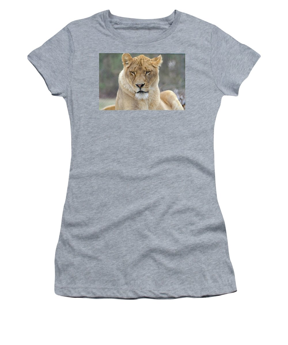 Women's T-Shirt (Athletic Fit) featuring the photograph Lioness    by Bob Cuthbert