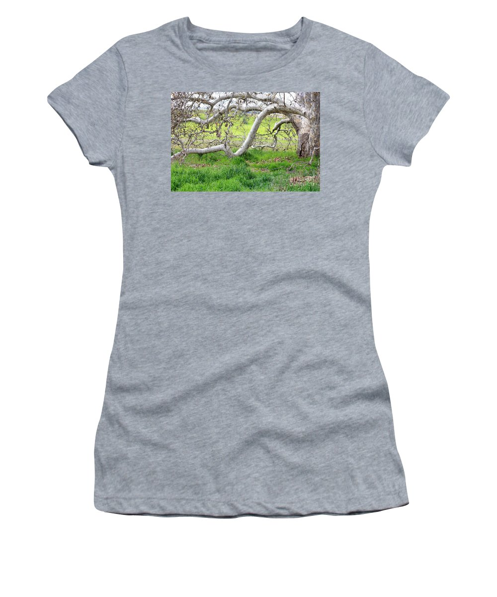 Landscape Women's T-Shirt (Athletic Fit) featuring the photograph Low Branches On Sycamore Tree by Carol Groenen