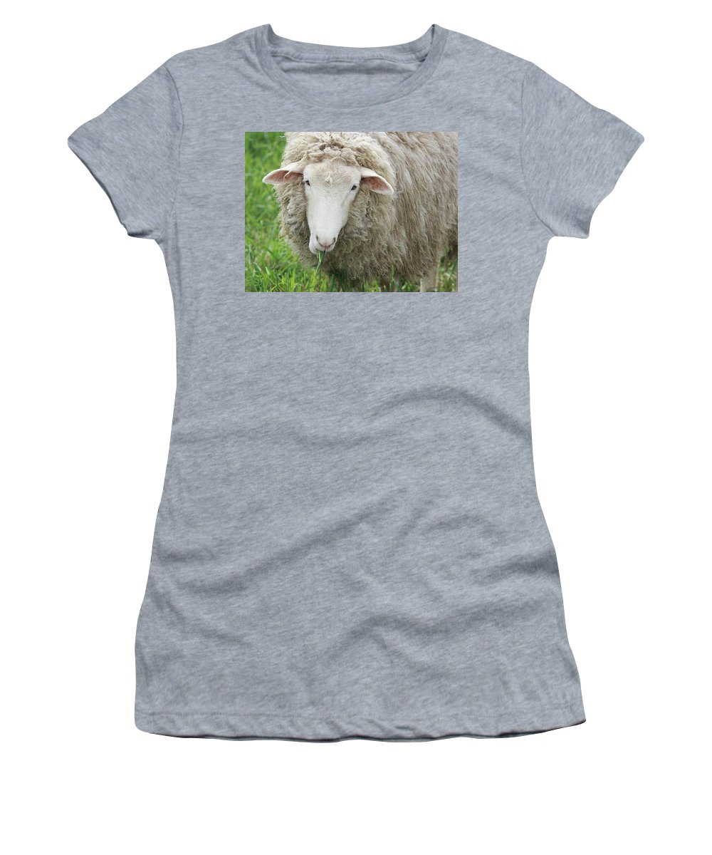 Sheep Women's T-Shirt featuring the photograph Mouthful by Jean Macaluso