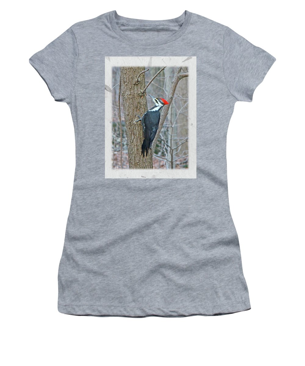 These Are Large Birds (crow Size) With A Bright Red Crest. They Are The Model For Woody Woodpecker Women's T-Shirt (Athletic Fit) featuring the photograph Pileated Woodpecker - Dryocopus Pileatus by Mother Nature
