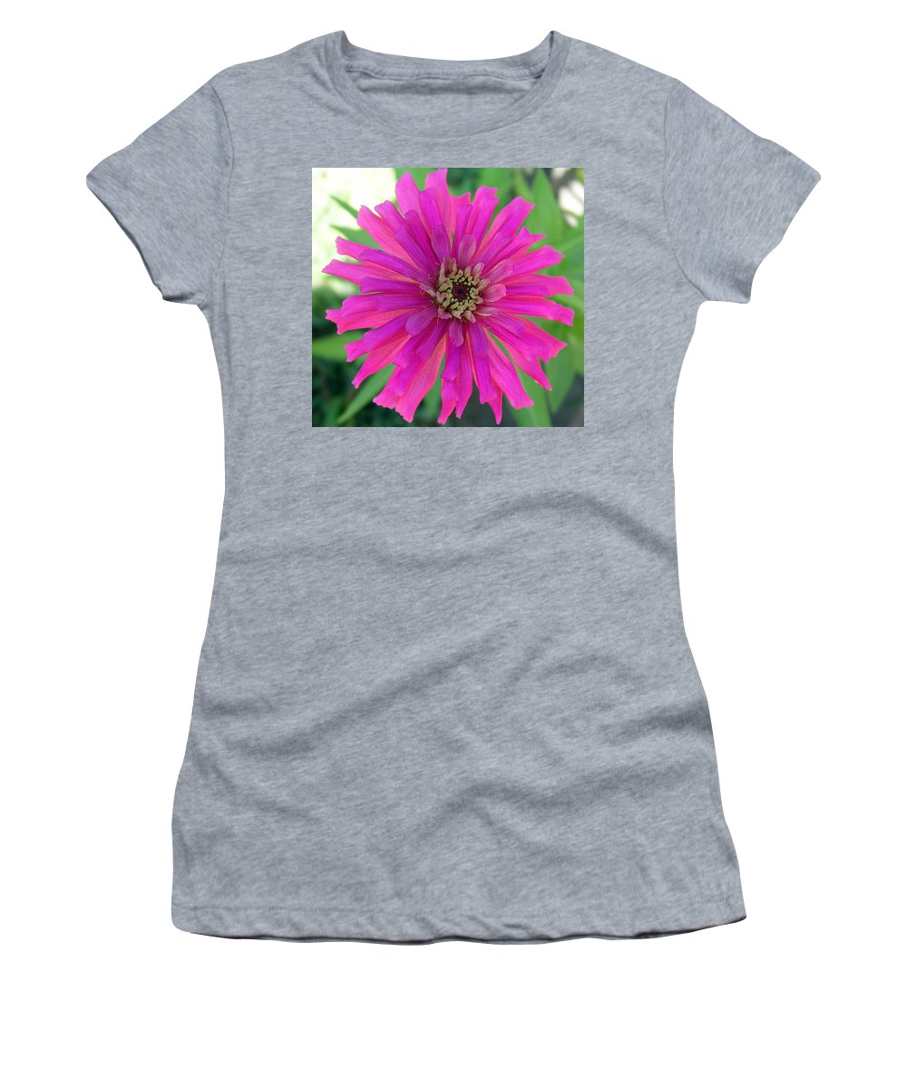 Zinnia; Flower; Pink; Translucent; Transparent; Florida; Petals; Garden; Zinnia; Agustifolia; Flower Women's T-Shirt featuring the photograph Pink Zinnia In Florida by Allan Hughes