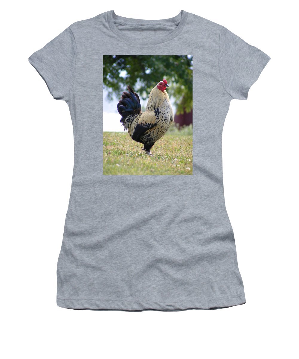 Pride Women's T-Shirt (Athletic Fit) featuring the photograph Pride by Ed Smith