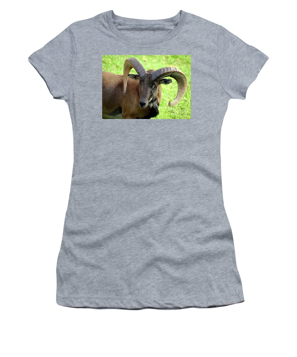 Big Horned Sheep Women's T-Shirt (Athletic Fit) featuring the photograph Ram by Jim And Emily Bush