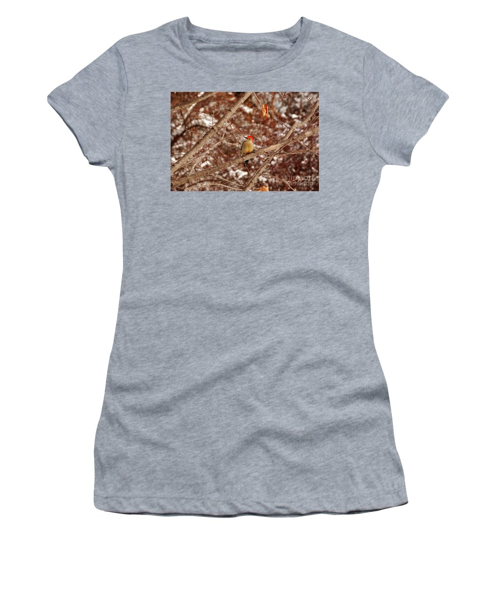 Woodpecker Women's T-Shirt (Athletic Fit) featuring the photograph Red Belly by Lori Tambakis