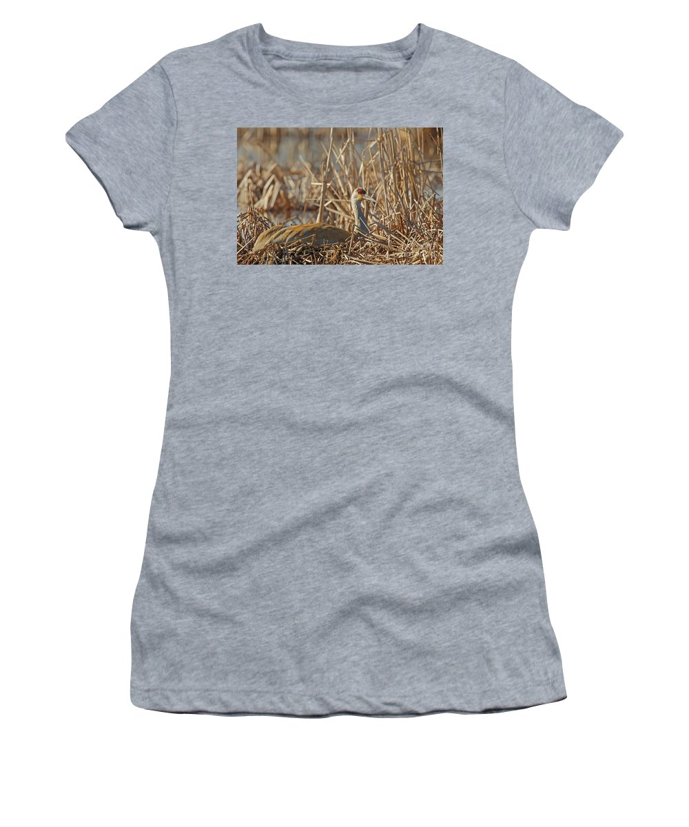 Sandhill Crane Women's T-Shirt featuring the photograph Sitting On The Nest by Natural Focal Point Photography