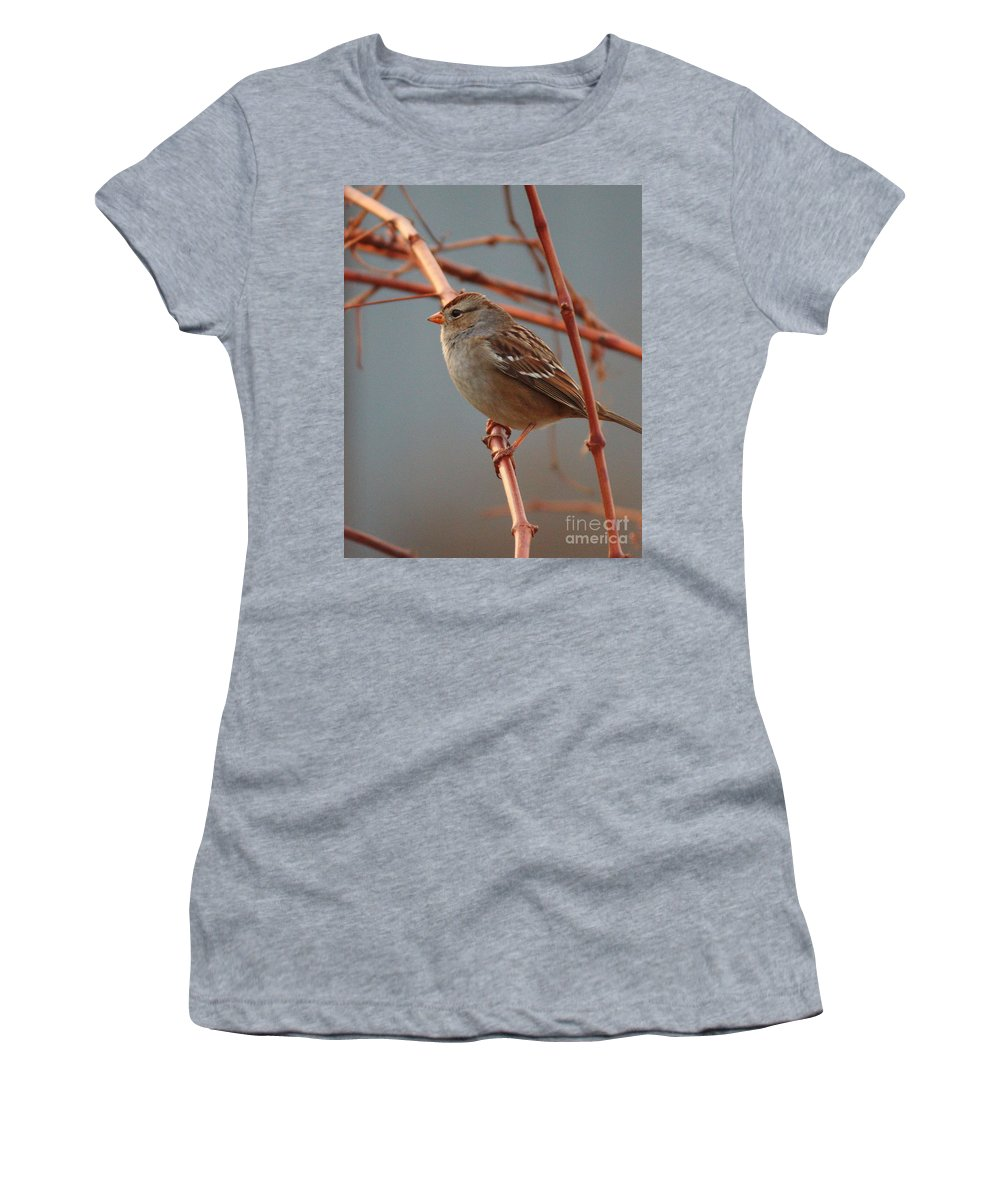 Bird Women's T-Shirt (Athletic Fit) featuring the photograph Sparrow On Grape Vine by Carol Groenen
