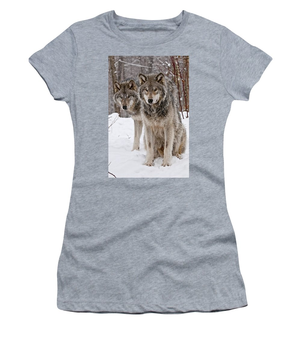 Michael Cummings Women's T-Shirt (Athletic Fit) featuring the photograph Timber Wolves In Winter by Michael Cummings