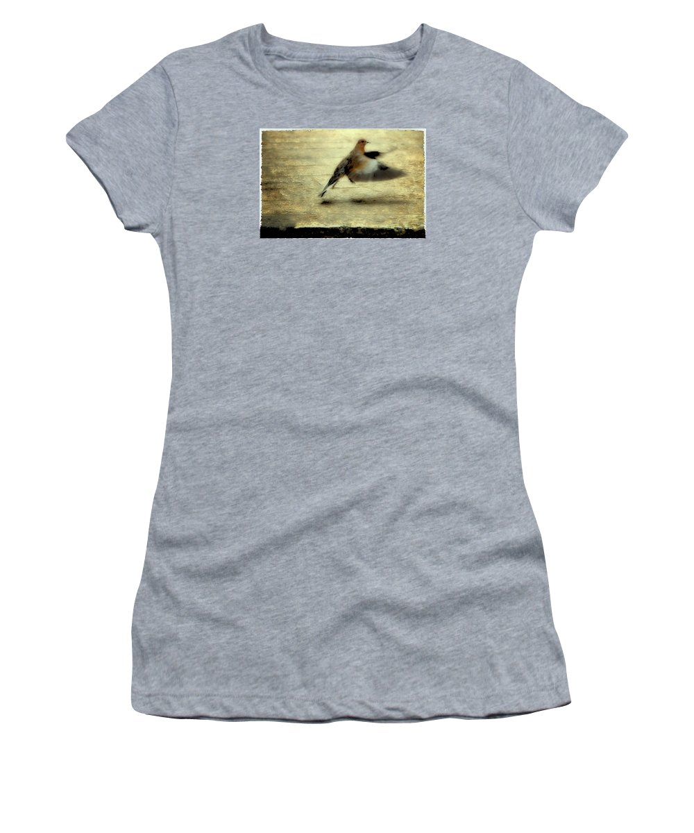 Jewish Women's T-Shirt (Athletic Fit) featuring the photograph Turtle Dove by Deb Cohen