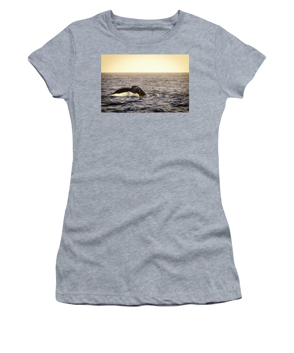 Animals Women's T-Shirt featuring the photograph Whale Fluke by Daniel Murphy