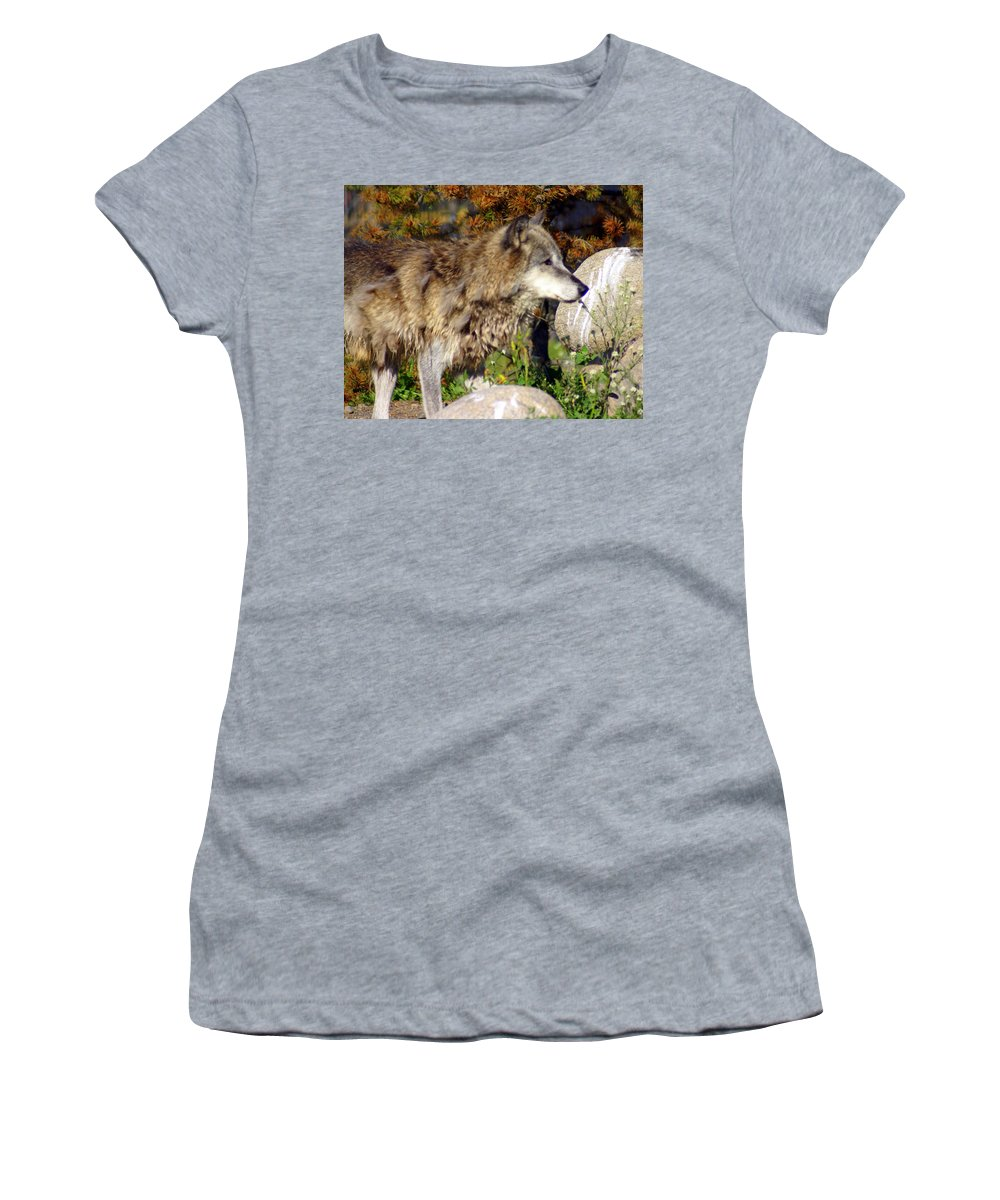 Wolf Women's T-Shirt (Athletic Fit) featuring the photograph Wolf On Patorl by Marty Koch