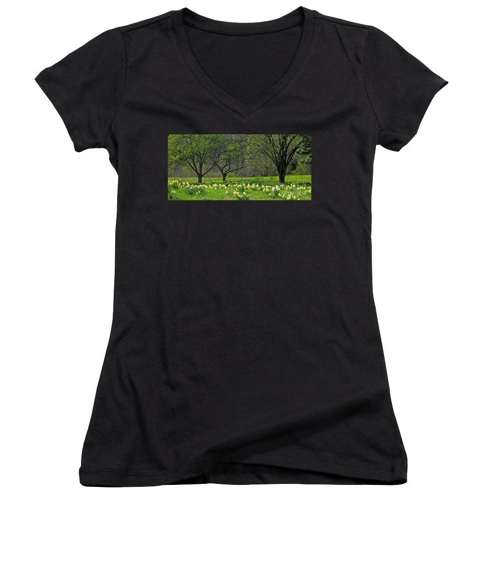 Spring Women's V-Neck T-Shirt featuring the photograph Daffodil Meadow by Ann Horn