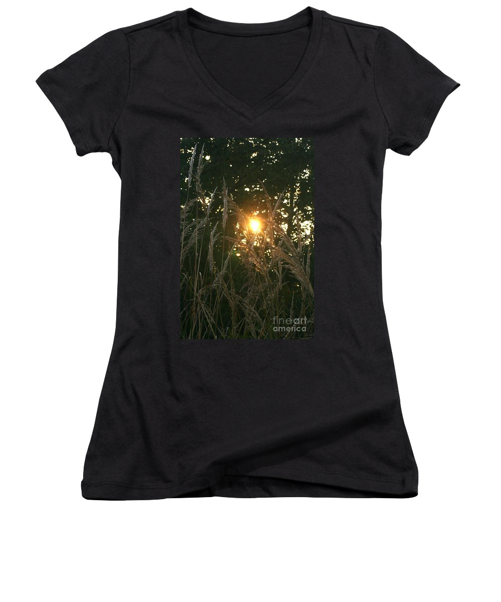 Light Women's V-Neck T-Shirt featuring the photograph Autumn Grasses In The Morning by Nadine Rippelmeyer