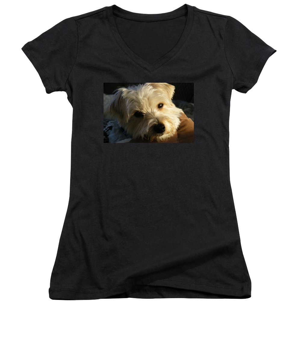Dog Women's V-Neck T-Shirt featuring the photograph Charlie by Ed Smith