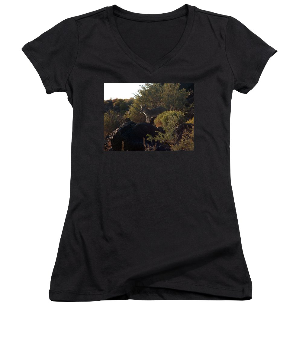 Coyote Women's V-Neck T-Shirt featuring the photograph Coyote At The Petrogyphs 2 by Tim McCarthy