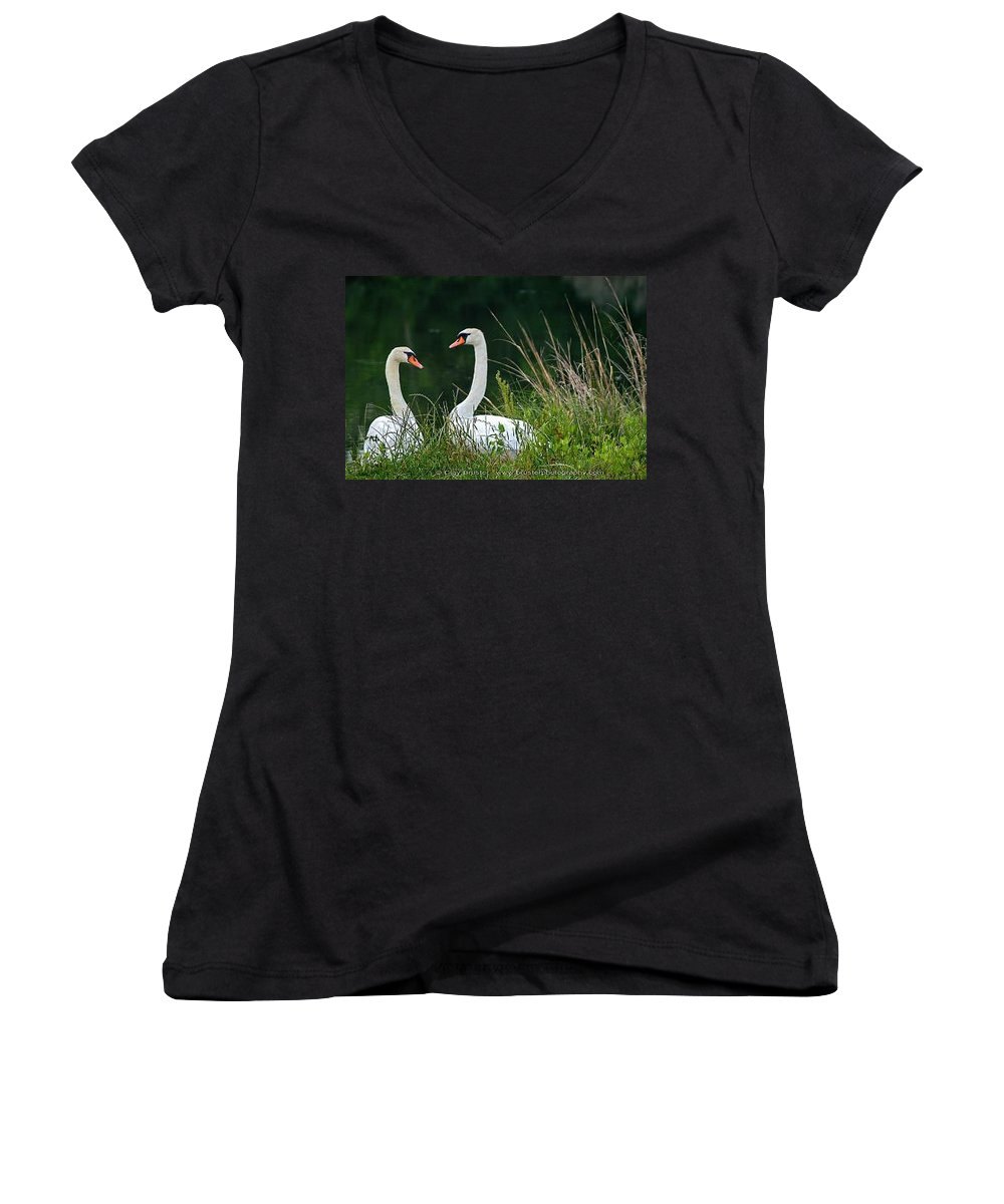 Clay Women's V-Neck T-Shirt featuring the photograph Loving Swans by Clayton Bruster