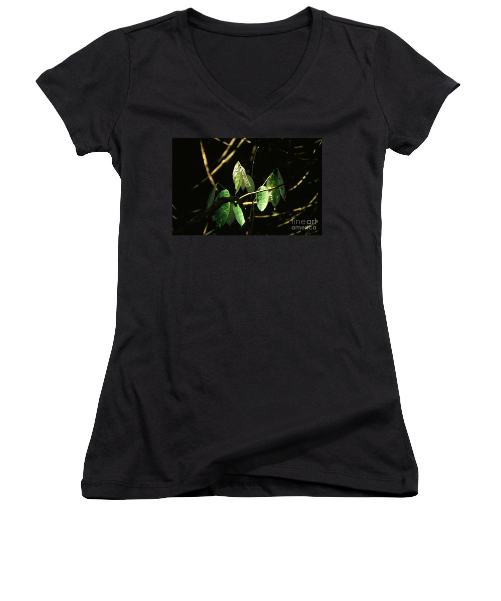 Leaves Women's V-Neck (Athletic Fit) featuring the photograph Sunlit Leaves by Kathy McClure
