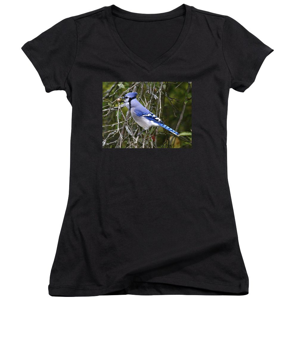 Bird Women's V-Neck T-Shirt featuring the photograph The Gathering by Robert Pearson