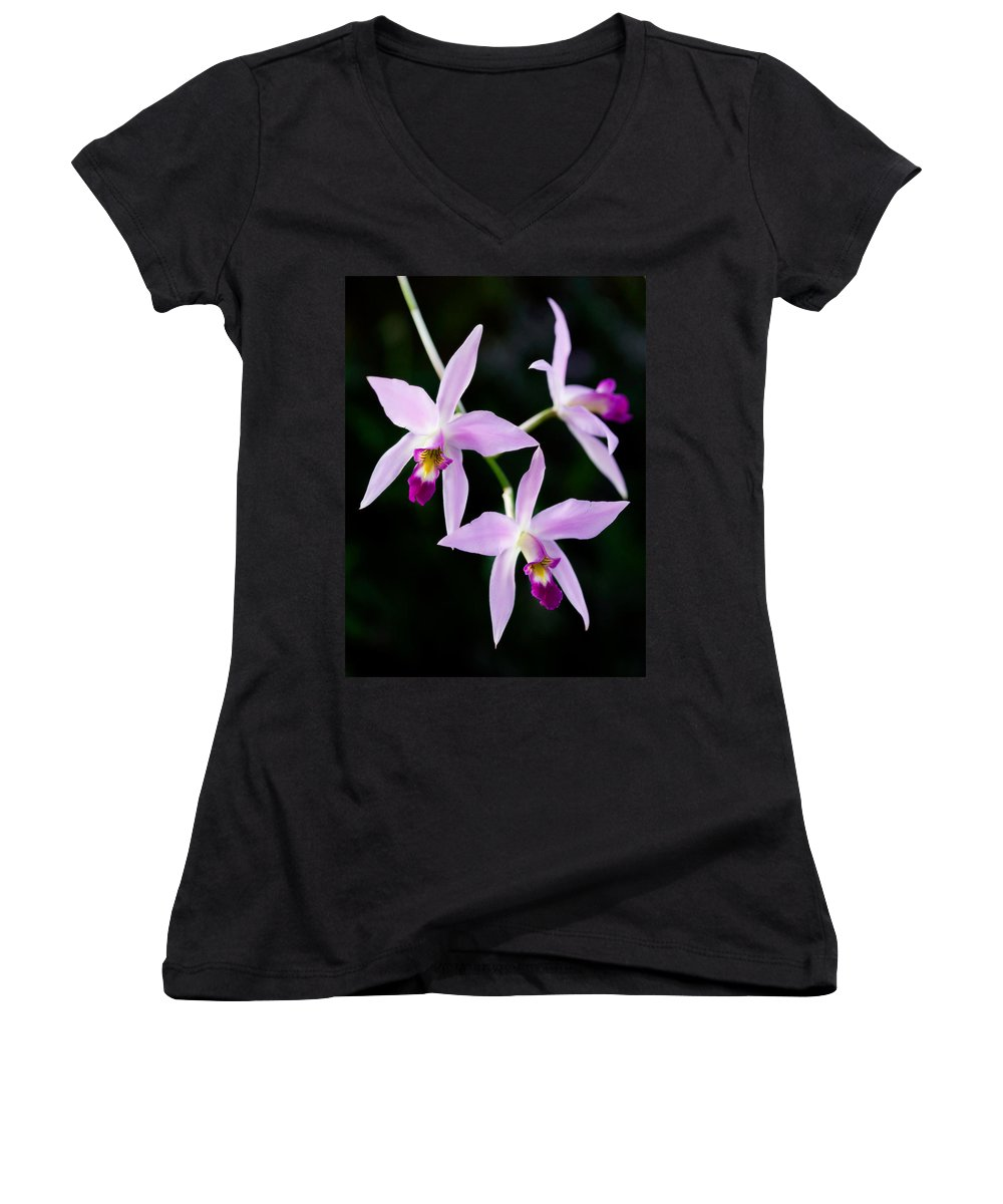 Orchid Women's V-Neck T-Shirt featuring the photograph Three Orchids by Marilyn Hunt