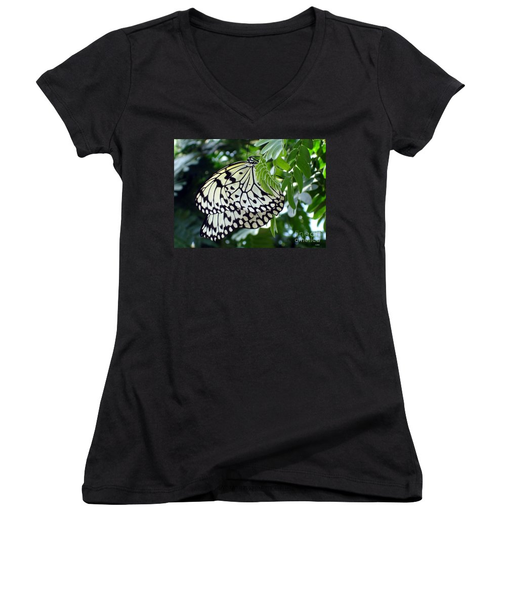 Butterfly Women's V-Neck T-Shirt featuring the photograph Zebra In Disguise by Shelley Jones