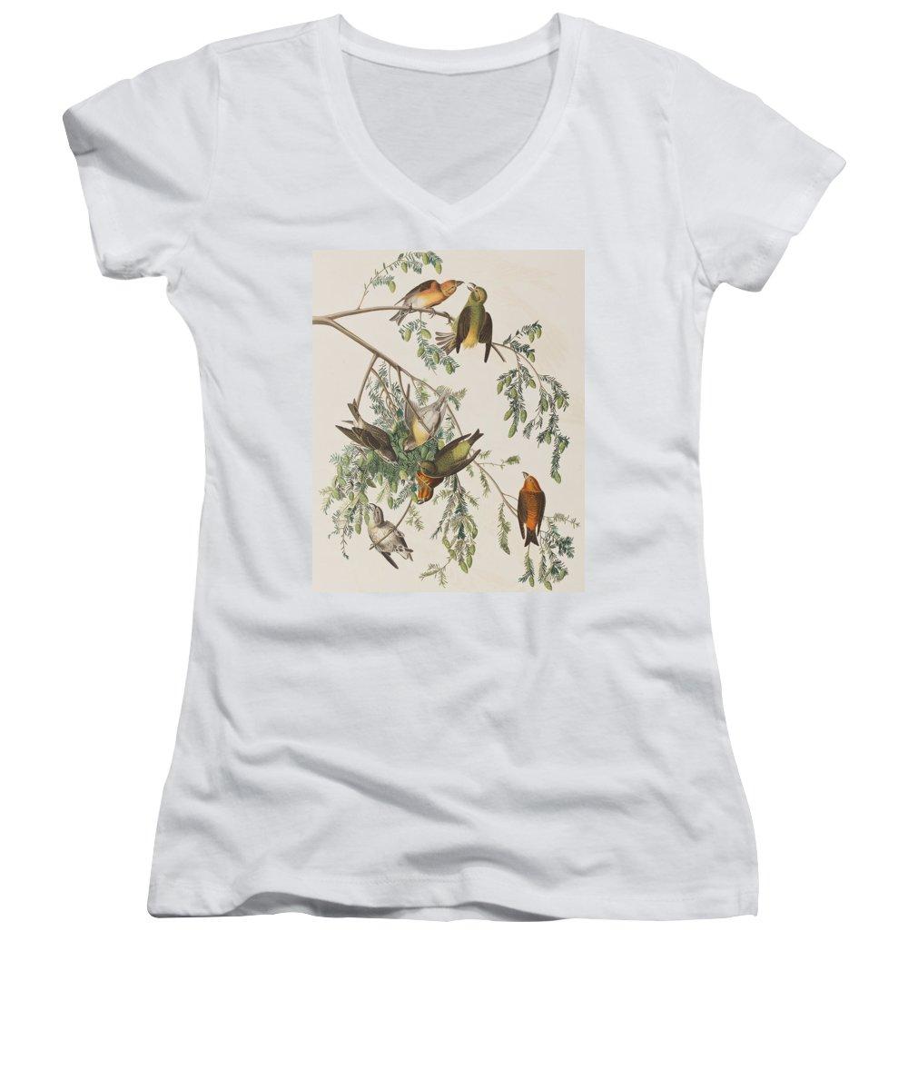 Crossbill Women's V-Neck T-Shirts