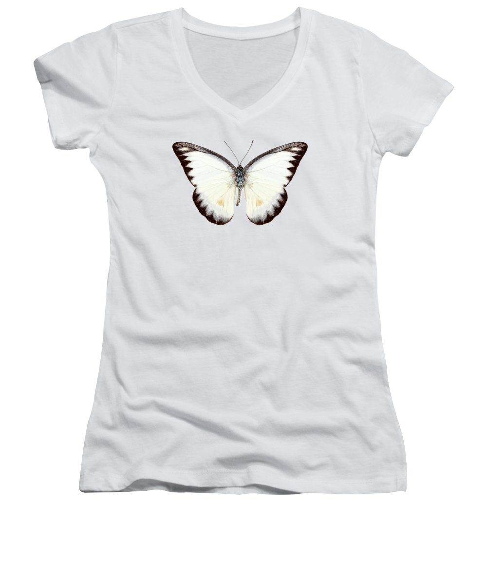 Albatross Women's V-Neck T-Shirts
