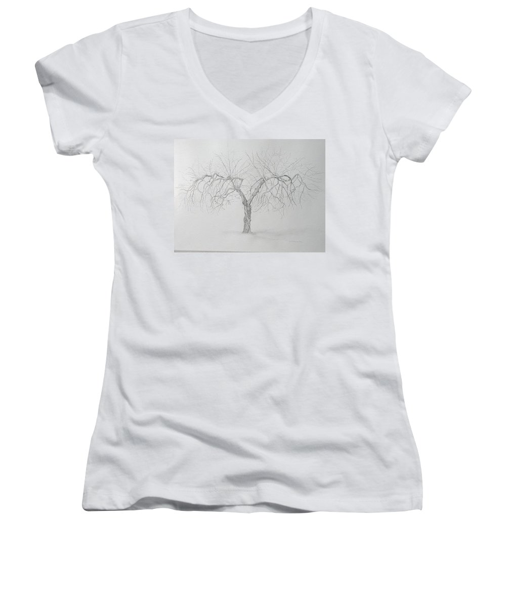 Cortland Apple Tree Women's V-Neck T-Shirt (Junior Cut) featuring the drawing Cortland Apple by Leah Tomaino