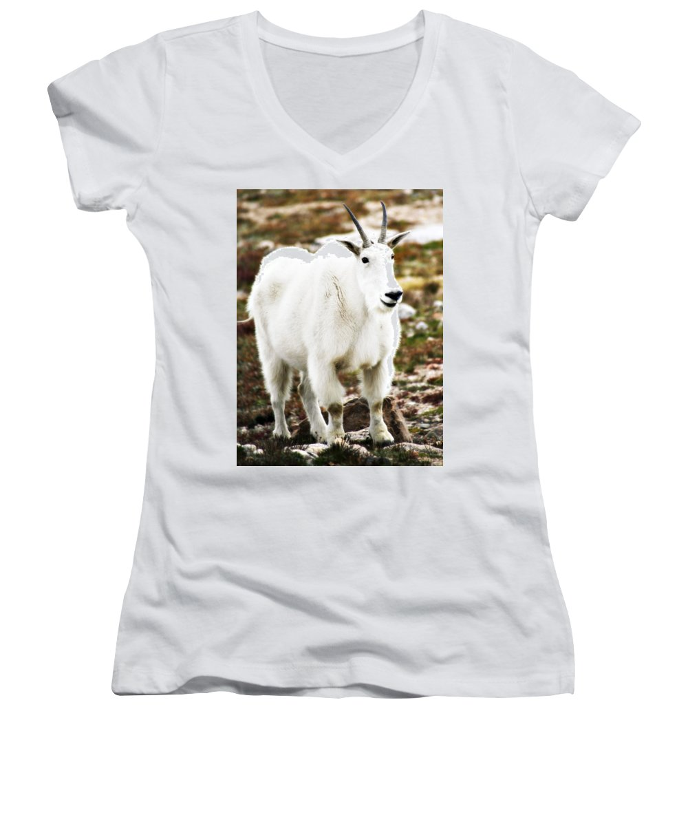 Animal Women's V-Neck T-Shirt featuring the photograph Mountain Goat by Marilyn Hunt