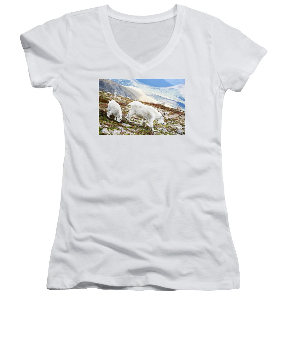 Mountain Women's V-Neck T-Shirt featuring the photograph Mountain Goats 1 by Marilyn Hunt
