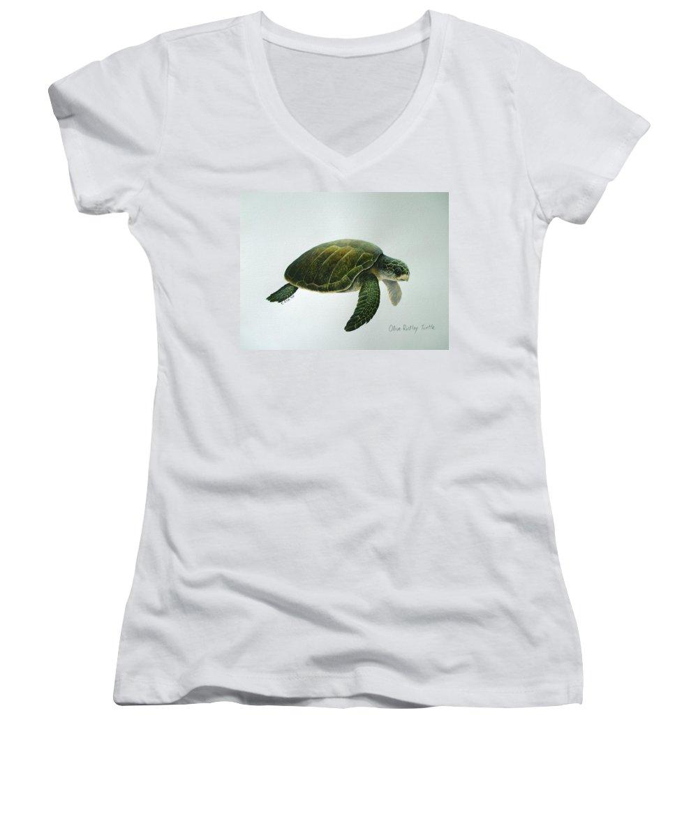 Olive Ridley Turtle Women's V-Neck T-Shirt featuring the painting Olive Ridley Turtle by Christopher Cox