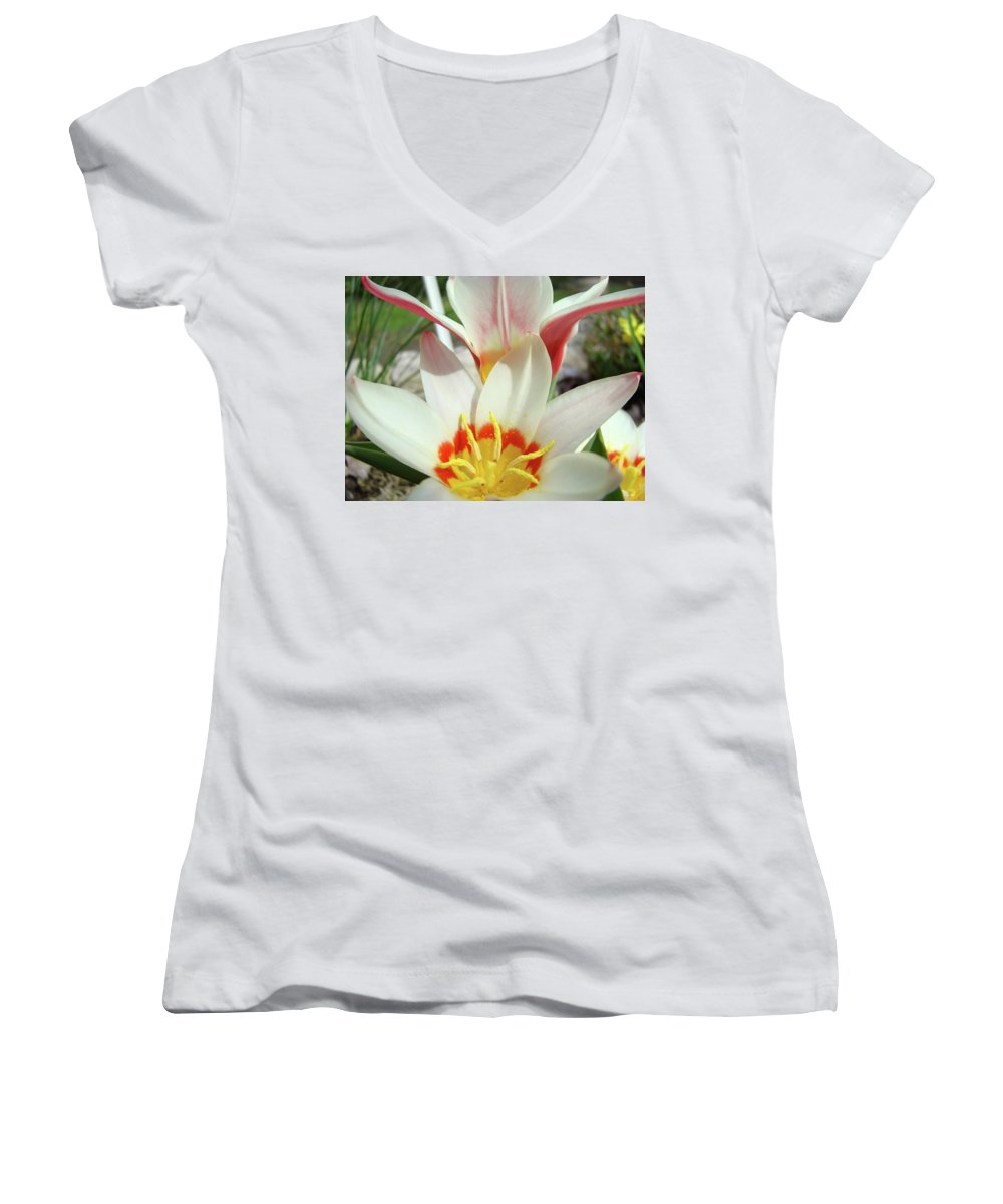 �tulips Artwork� Women's V-Neck (Athletic Fit) featuring the photograph Tulips Flowers Artwork 1 Tulip Flower Art Prints Spring Floral Art White Tulips Garden by Baslee Troutman