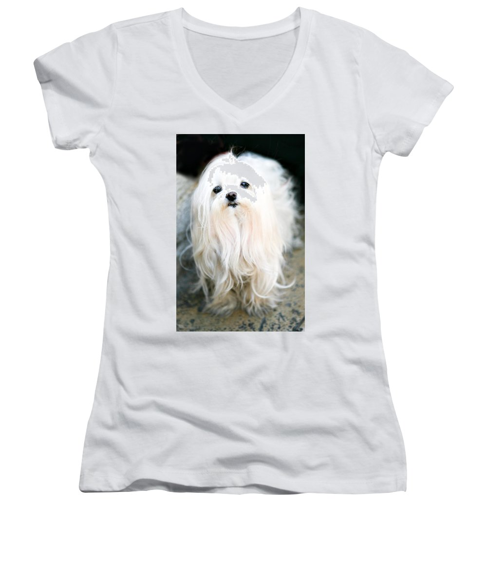 Small Women's V-Neck T-Shirt featuring the photograph White Fluff by Marilyn Hunt