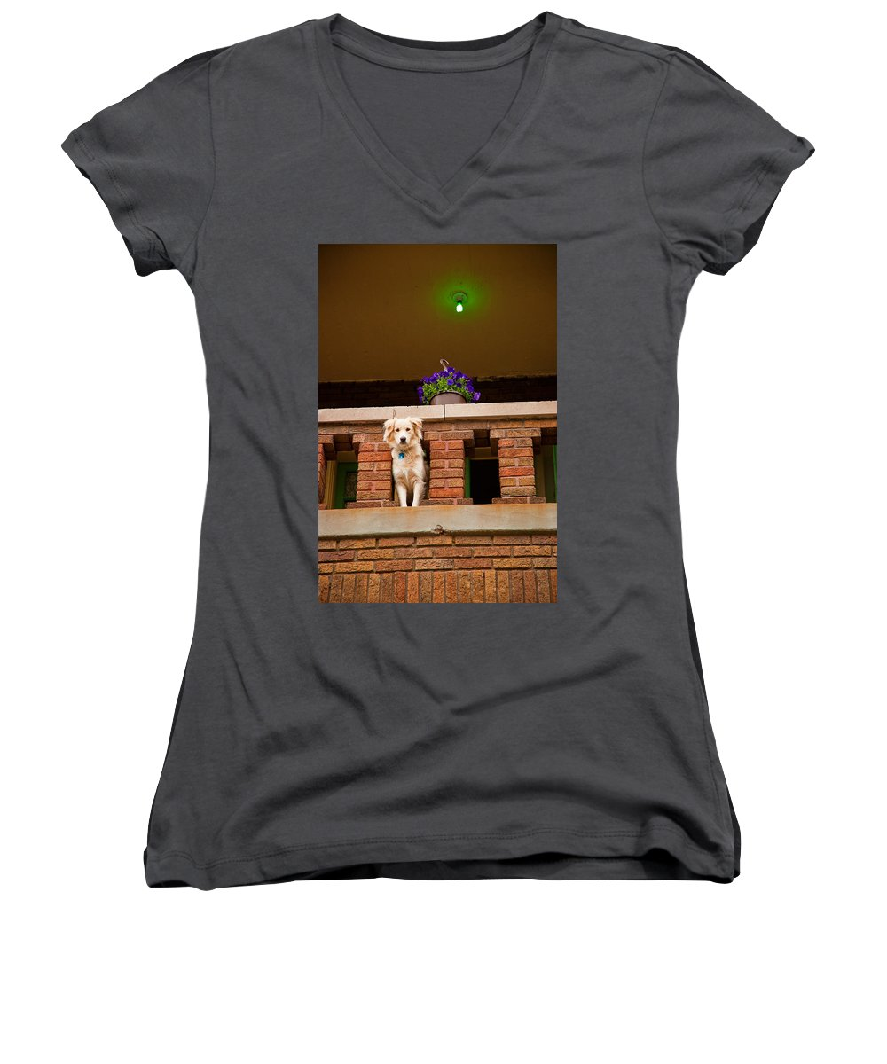 Dog Women's V-Neck (Athletic Fit) featuring the photograph The Critic by Kristi Swift