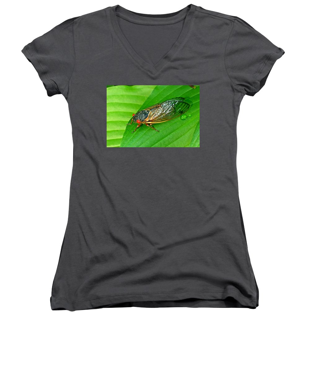 17 Women's V-Neck T-Shirt featuring the photograph 17 Year Periodical Cicada by Douglas Barnett
