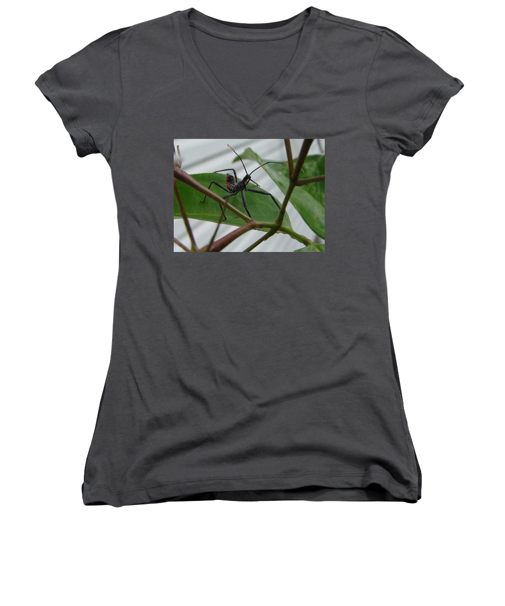 Insect Red Black Green Leaf Women's V-Neck (Athletic Fit) featuring the photograph Assassin Bug by Luciana Seymour