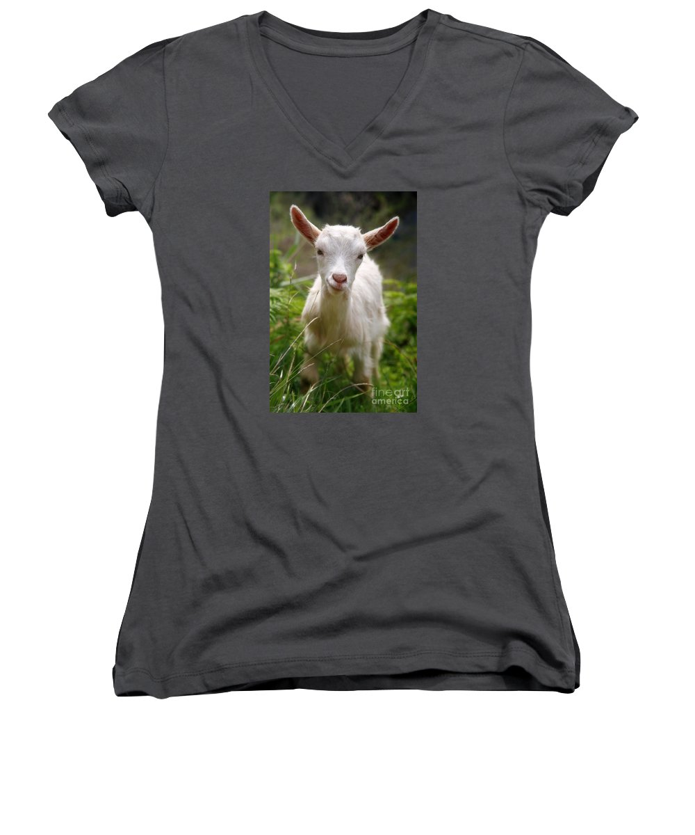 Animals Women's V-Neck T-Shirt featuring the photograph Baby Goat by Gaspar Avila