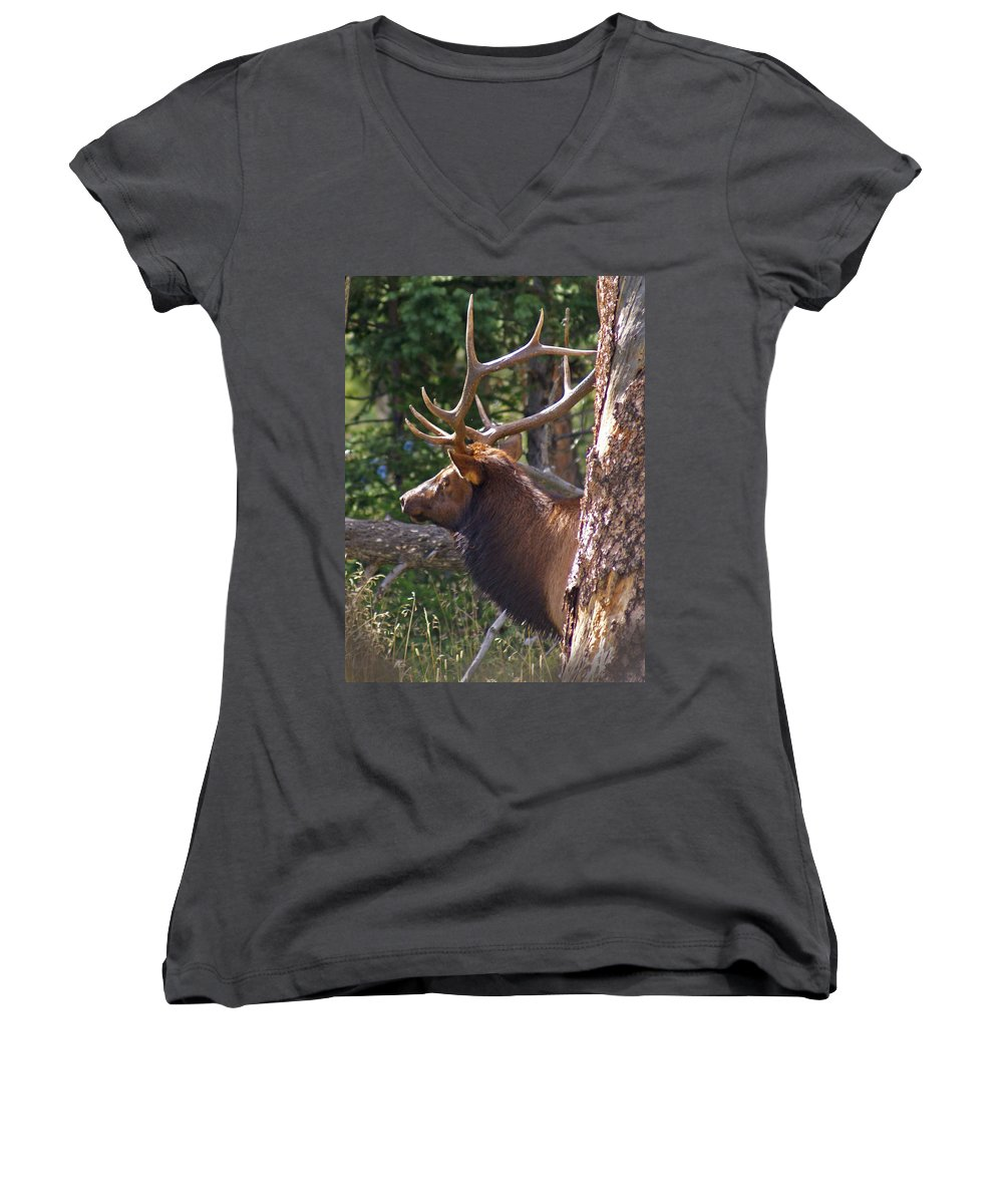 Elk Women's V-Neck T-Shirt featuring the photograph Bull Elk 2 by Heather Coen