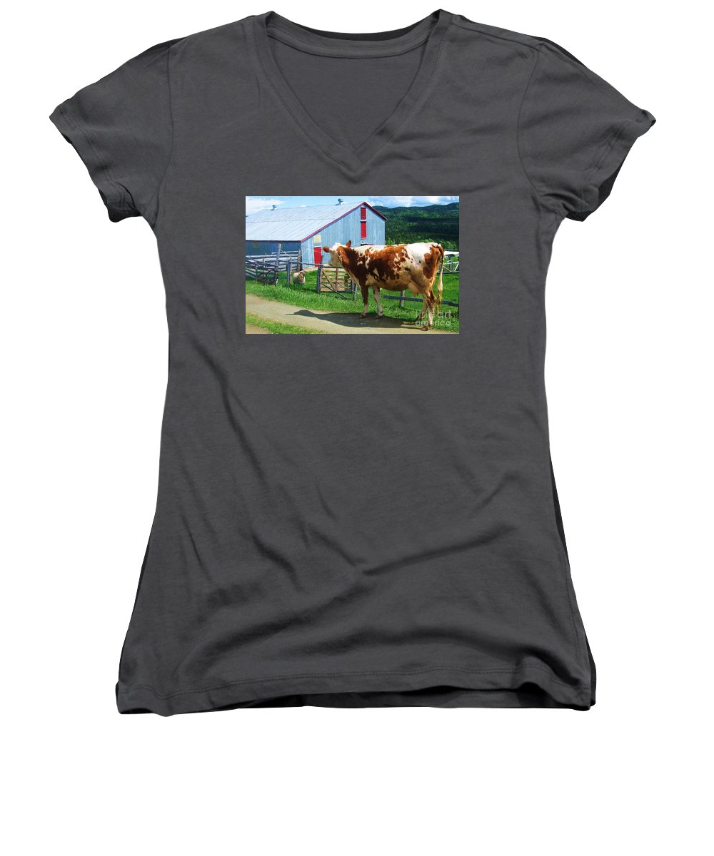 Photograph Cow Sheep Barn Field Newfoundland Women's V-Neck T-Shirt featuring the photograph Cow Sheep And Bicycle by Seon-Jeong Kim