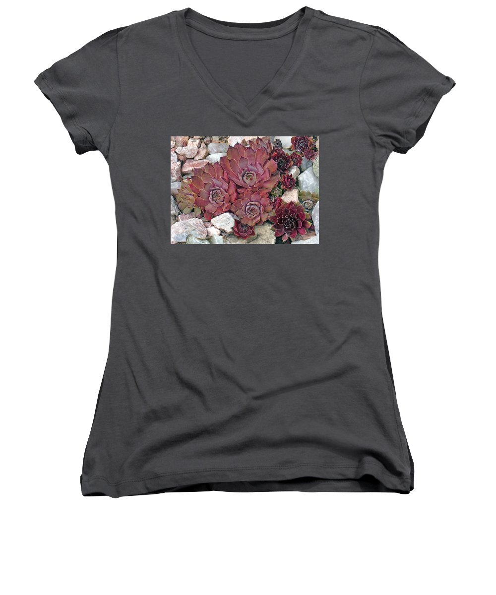 Landscape Women's V-Neck T-Shirt featuring the photograph Hens And Chickens by Steve Karol