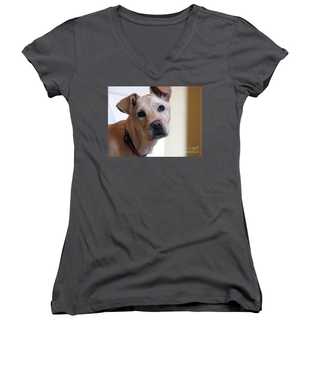 Dog Women's V-Neck T-Shirt featuring the photograph Honey by Amanda Barcon