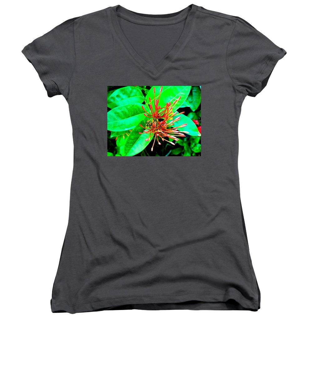 Flower Women's V-Neck T-Shirt featuring the photograph In My Garden by Ian MacDonald