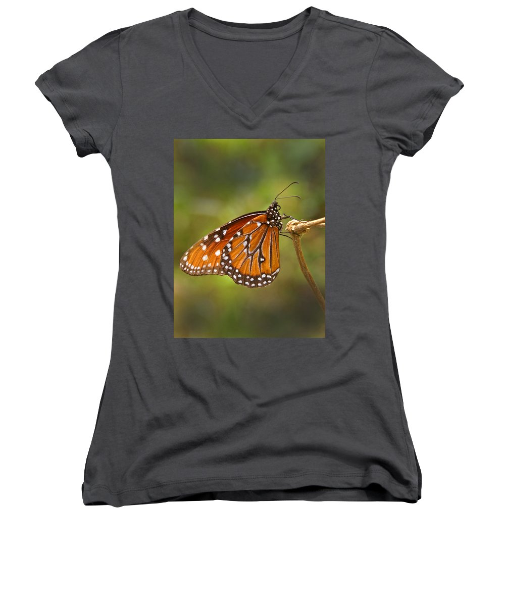 Monarch Women's V-Neck (Athletic Fit) featuring the photograph Monarch Butterfly by Heather Coen