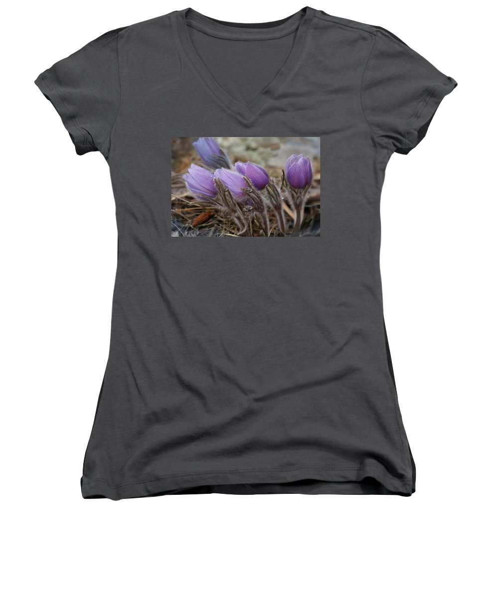 Pasque Flower Women's V-Neck (Athletic Fit) featuring the photograph Pasque Flower Watercolor by Heather Coen