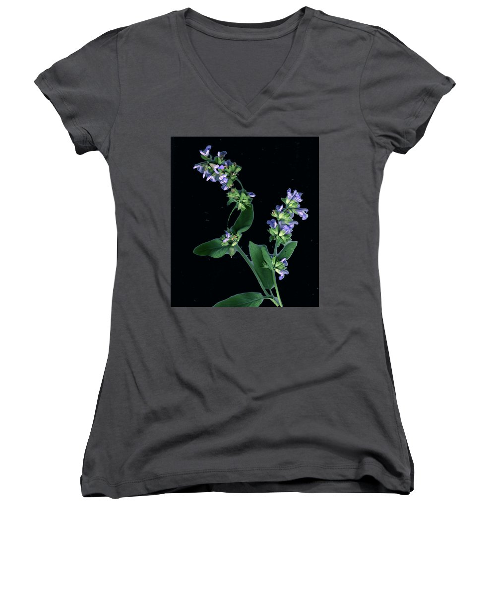 Women's V-Neck T-Shirt featuring the photograph Sage Blossom by Wayne Potrafka