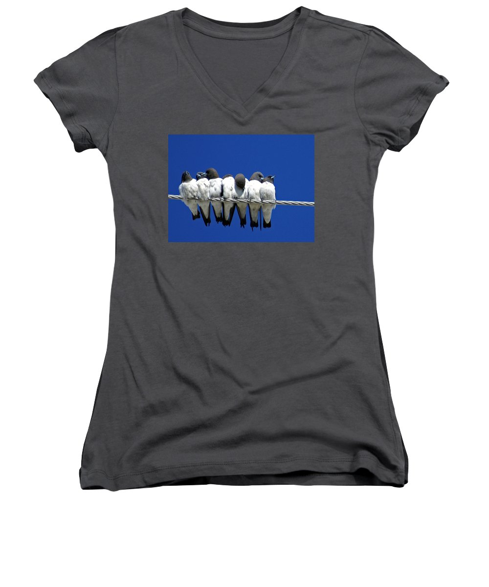 Animals Women's V-Neck (Athletic Fit) featuring the photograph Seven Swallows Sitting by Holly Kempe