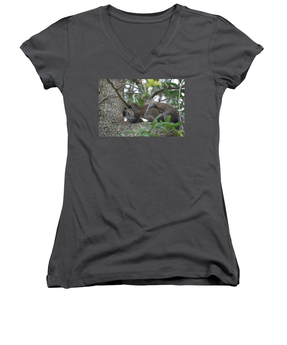 Squirrels Women's V-Neck T-Shirt featuring the photograph The Fight For Life by Rob Hans