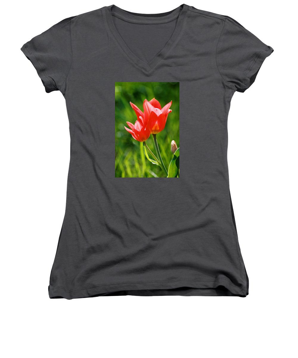 Flowers Women's V-Neck T-Shirt featuring the photograph Toronto Tulip by Steve Karol