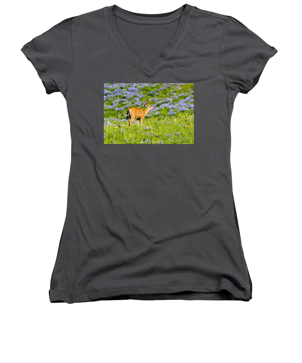 Deer Women's V-Neck (Athletic Fit) featuring the photograph Velvet On Lupine by Mike Dawson