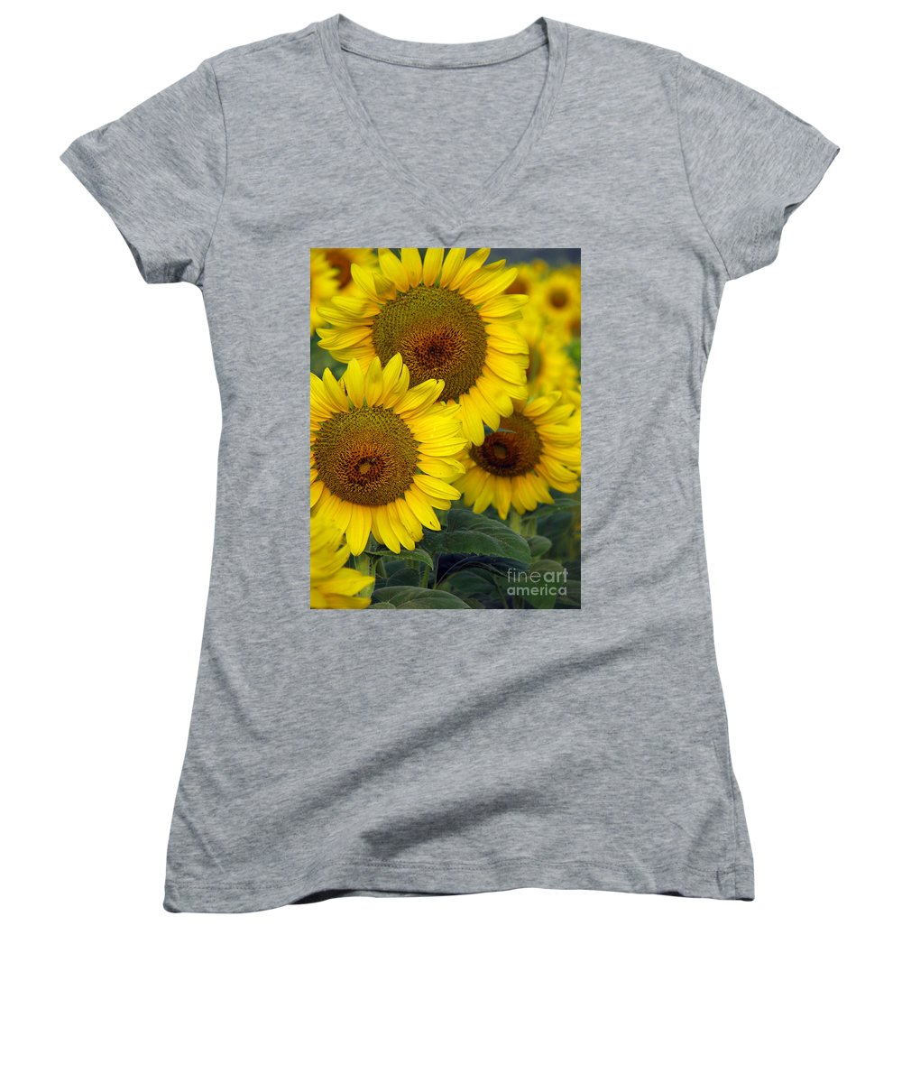 Sunflowers Women's V-Neck T-Shirt featuring the photograph Sunflower Series by Amanda Barcon