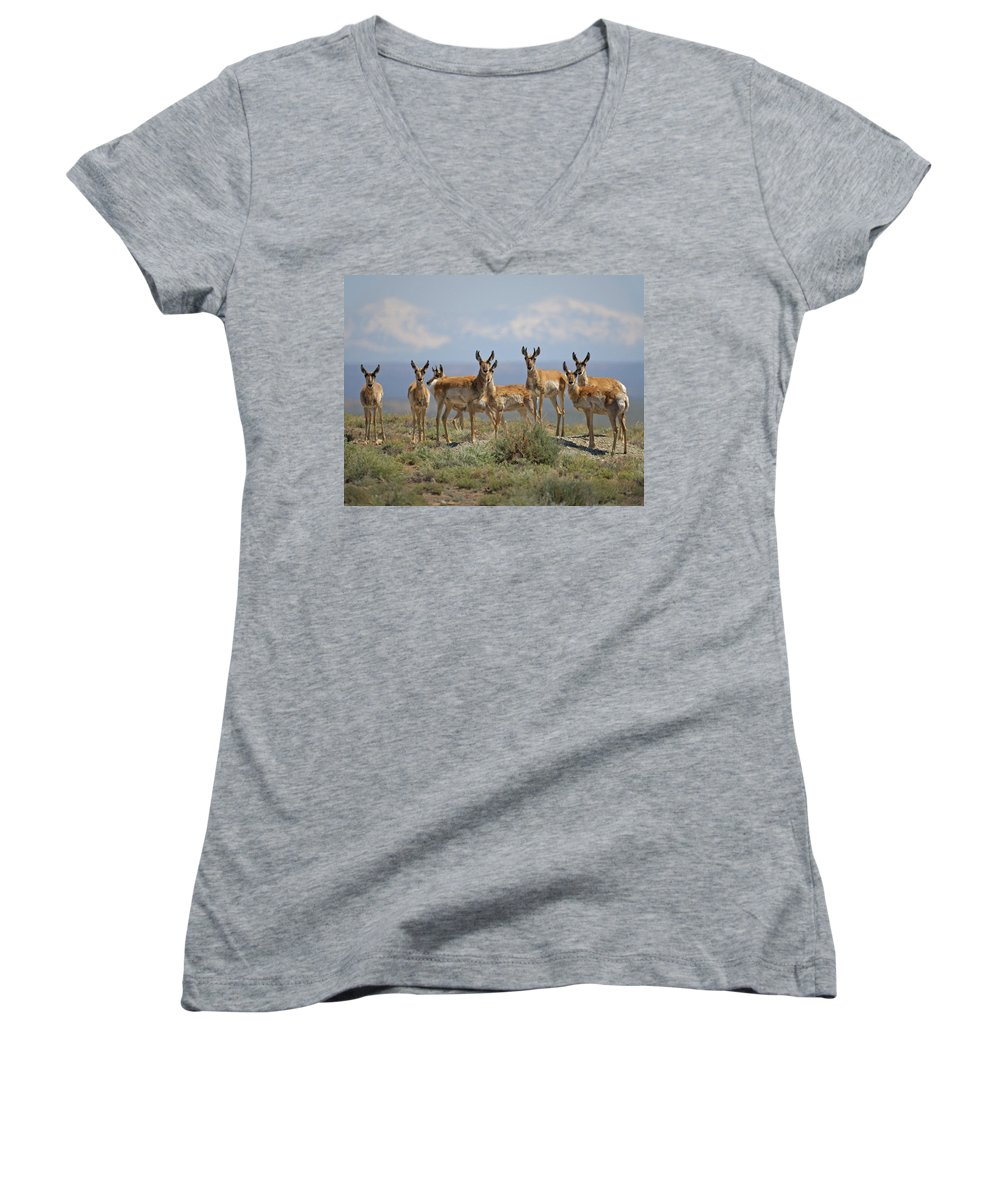 Antelope Women's V-Neck (Athletic Fit) featuring the photograph Antelope by Heather Coen
